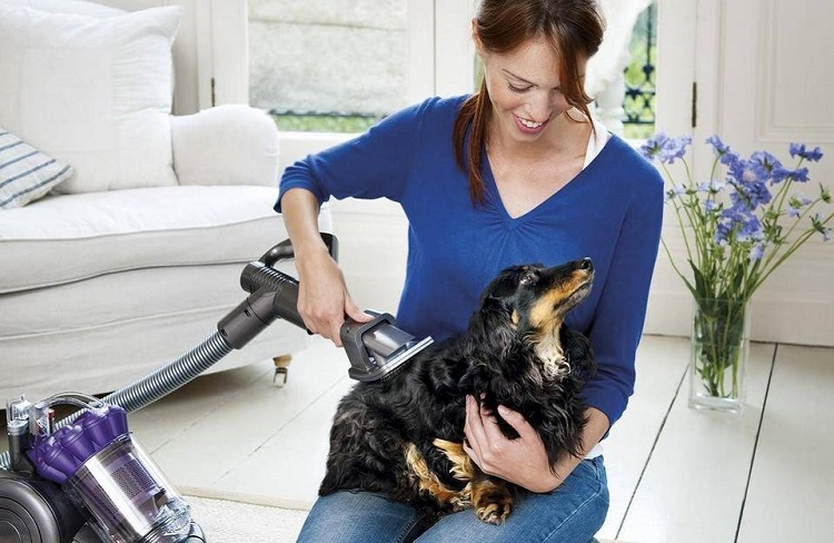 Vacuuming Dog
